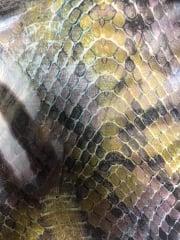 Chiffon Soft Touch Sheer Fabric - Ethnic Animal CHF235 BRGRN