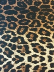 Viscose Cotton Stretch Lycra Fabric- Brown/Camel Leopard SQ218 BRCML